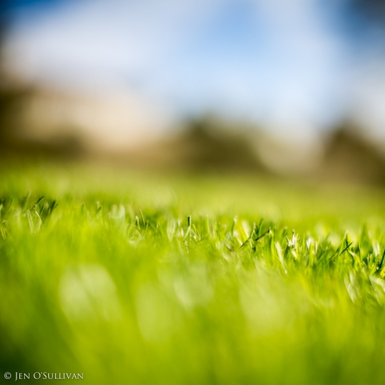 Grass in the field
